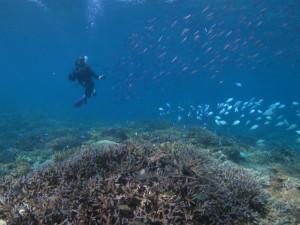 沖縄 ダイビング 宜野湾サンゴ
