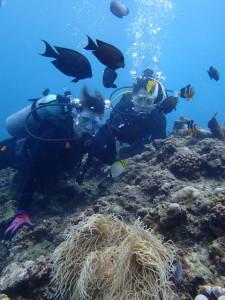 沖縄 ダイビング 真栄田岬 体験ダイビング