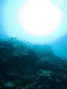 沖縄 ダイビング ドリフト