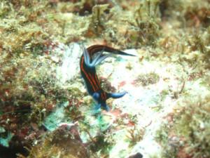 オキナワ ダイビング ウミウシ