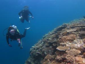 沖縄 ダイビング 万座のサンゴ