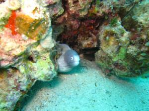 沖縄 ダイビング レッドビーチ 体験ダイビング サビウツボ