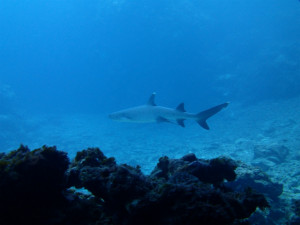沖縄 ダイビング 慶良間 体験ダイビング 講習