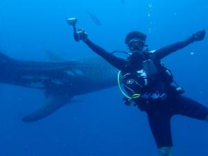 沖縄 ダイビング ジンベエ