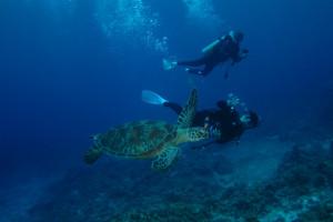 慶良間 ダイビング ウミガメ