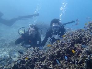 沖縄 ダイビング 本島近海 FUNダイビング 体験ダイビング