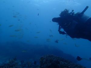 沖縄 ダイビング 真栄田ボート 体験ダイビング FUNダイビング