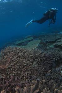 宜野湾珊瑚 沖縄ダイビング