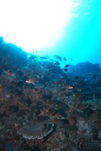 沖縄 ダイビング 南部 トコマサリ