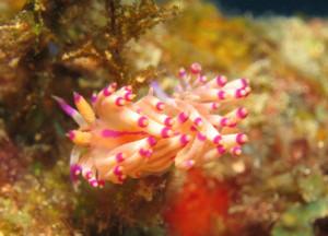 沖縄 ダイビング ウミウシ