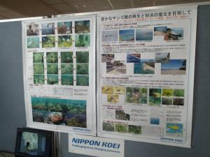 沖縄 ダイビング サンゴ