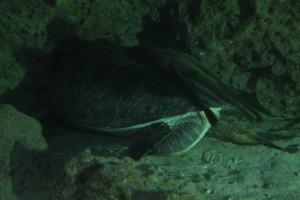 沖縄 ダイビング 亀神
