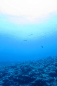 渡名喜島 ダイビング イソマグロ