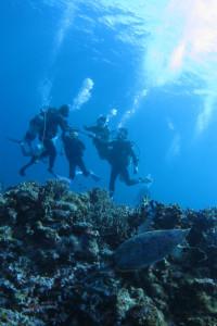 沖縄 ウミガメ 体験ダイビング