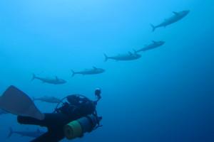 沖縄 ダイビング イソマグロ