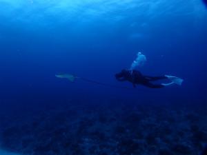 沖縄 ダイビング トビエイ