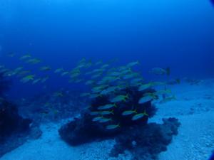 沖縄 ダイビング ウチザン礁