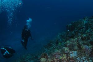 沖縄 ダイビング ウミガメ