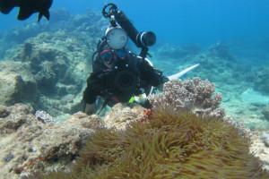 沖縄 ダイビング 隠れクマノミ