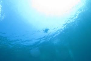 沖縄 diving ウミガメ