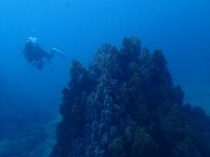 沖縄 ダイビング FUNダイビング 辺野古 大浦湾