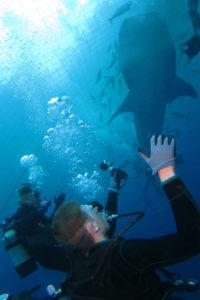 沖縄 ダイビング ジンベイザメと潜る