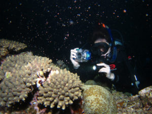 沖縄 ダイビング ミドリイシの産卵
