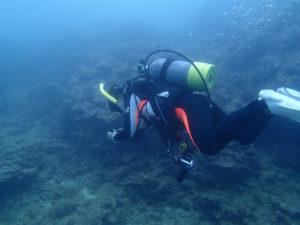 沖縄 ダイビング 砂辺 調査ダイブ