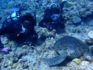 沖縄 ダイビング 講習中にカメ