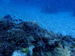 沖縄 ケラマ ダイビング
