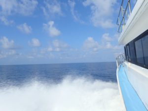 沖縄 ダイビング 慶良間 保全活動 台風