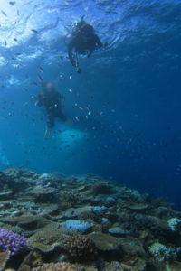 沖縄 ダイビング 万座のサンゴ礁