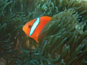沖縄 ダイビング 東海岸 ファンダイビング
