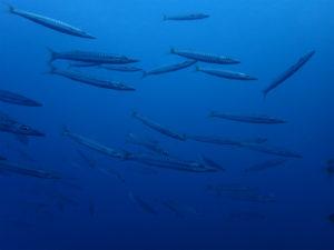 沖縄 ダイビング 近海ダイビング 体験ダイビング