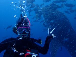 沖縄 ダイビング FUNダイビング ジンベエ
