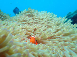 沖縄 イナンビシ ダイビング FUNダイビング
