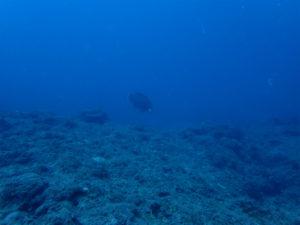 沖縄 ダイビング イナンビシ AOW講習