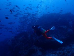 沖縄 ダイビング 慶良間ドリフト