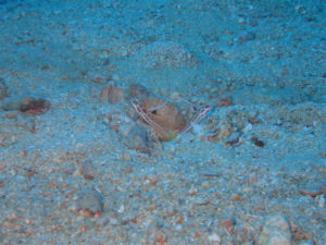 沖縄 本島近海 嘉手納沖 ダイビング 沖縄ダイビング ファンダイビング 体験ダイビング