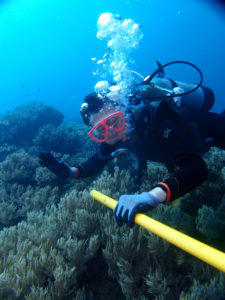 沖縄 体験ダイビング ソフトコーラルを
