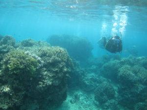 沖縄 北部 本部 ゴリラチョップ ダイビング FUNダイビング ファンダイビング
