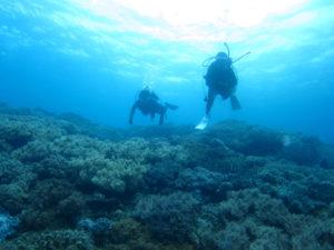 沖縄 近海 イナンビシ FUNダイビング 体験ダイビング ダイビング