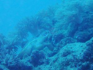 沖縄 近海 イナンビシ ファンダイビング ダイビング