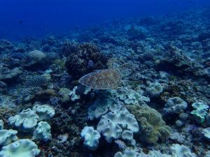 沖縄 ダイビング 慶良間 保全活動 アルファダイブ
