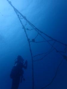 沖縄 ダイビング FUNダイビング 宜野湾 アルファダイブ