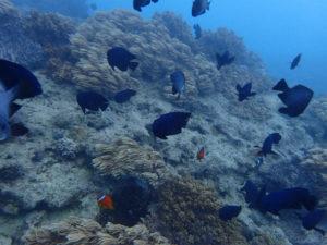 沖縄 ダイビング イナンビシ 体験ダイビング アルファダイブ