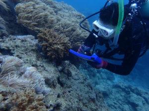沖縄 近海 イナンビシ FUNダイビング 体験ダイビング AOW講習 ダイビング