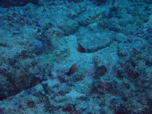 沖縄 本島 近海 西海岸 FUNダイビング ダイビング