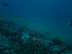 沖縄 近海 本島 ダイビング ファンダイビング ボートダイビング FUNダイビング