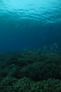 沖縄 北谷 砂辺 ファンダイビング ダイビング ビーチダイビング